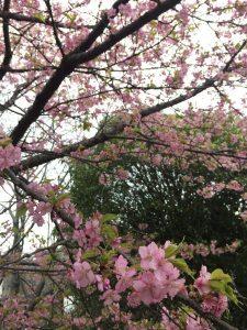 旅行:SE女子ひとり旅シリーズ 〜静岡・三島へ日帰り旅。